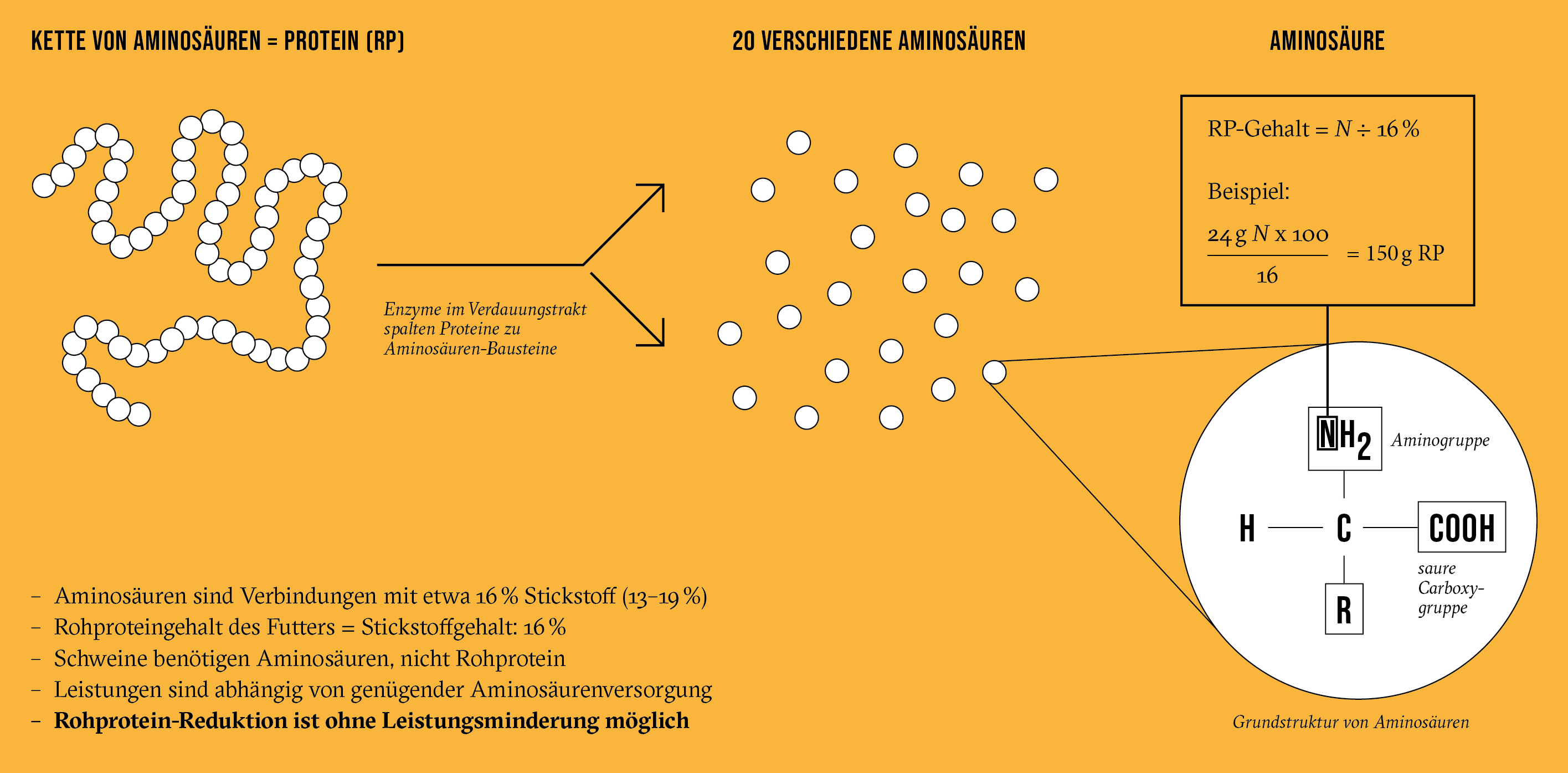 Grafik Aminosauren