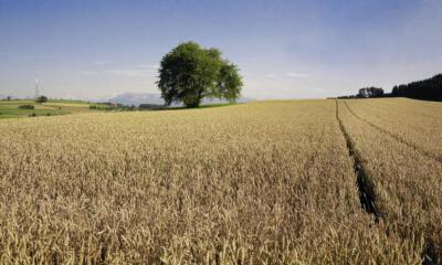 Was fordern die beiden Agrarinitiateven?